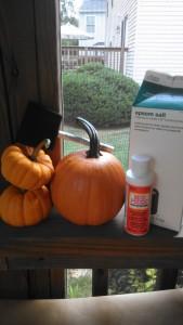 epsom pumpkin 1