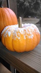 epsom pumpkin 2