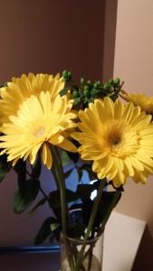yellowgerbers